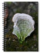 Green Turkey Tails Spiral Notebook