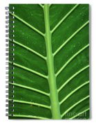 Green Veiny Leaf 1 Spiral Notebook