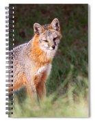 Grey Fox - Vantage Point Spiral Notebook
