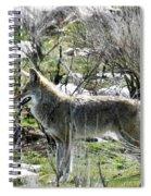 grey Fox 2 Spiral Notebook