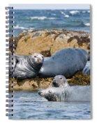 Grey Seals Spiral Notebook