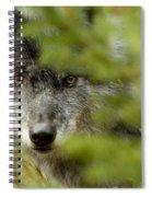 Grey Wolf, Outside Golden, British Spiral Notebook