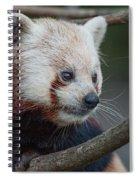 Grimacing Red Panda Spiral Notebook