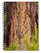 Grizzly Bear Cub Up A Tree, Yukon Spiral Notebook