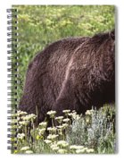 Grizzly Bear In Yellowstone Neg.28 Spiral Notebook