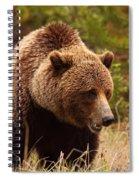 Grizzly Bear, Yukon Spiral Notebook