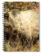 Grizzly Camouflage Spiral Notebook