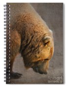 Grizzly Hanging Head Spiral Notebook