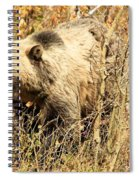Grizzly In The Brush Spiral Notebook