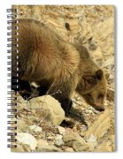 Grizzly On The Rocks Spiral Notebook