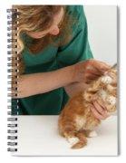 Grooming A Kitten Spiral Notebook