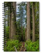 Group Of Redwoods Spiral Notebook