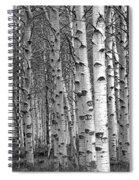 Grove Of Birch Trees Spiral Notebook