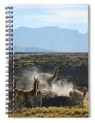 Guanacos In Action Spiral Notebook
