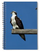 Guarding The Nest Spiral Notebook
