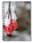 Guelder Rose In The Snow Spiral Notebook