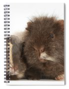 Guinea Pig And Baby Spiral Notebook
