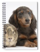 Guinea Pig And Blue-and-tan Dachshund Spiral Notebook