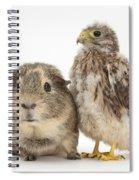 Guinea Pig And Kestrel Chick Spiral Notebook
