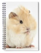 Guinea Pig Washing Paw Spiral Notebook