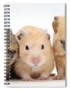 Guinea Pigs And Hamster Spiral Notebook