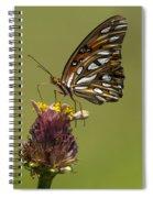 Gulf Fritillary Butterfly - Agraulis Vanillae Spiral Notebook