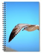 Gull On The Wing Spiral Notebook