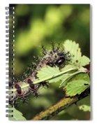 Gypsy Moth Larva Chomp Spiral Notebook