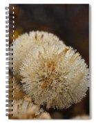 Hairy Aster Spiral Notebook