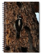 Hairy Woodpecker On Pine Tree Spiral Notebook
