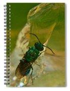 Halicid Bee 12 Spiral Notebook
