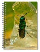 Halicid Bee 15 Spiral Notebook