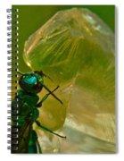 Halicid Bee 17 Spiral Notebook