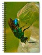 Halicid Bee 20 Spiral Notebook