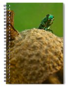 Halicid Bee 21 Spiral Notebook