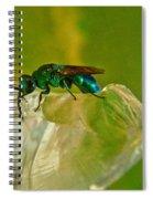 Halicid Bee 22 Spiral Notebook