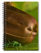 Halicid Bee 5 Spiral Notebook