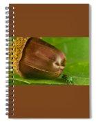 Halicid Bee Spiral Notebook
