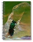 Halicid Bee11 Spiral Notebook