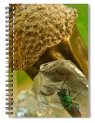 Halicid Wasp 5 Spiral Notebook