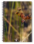 Halloween Pennant Dragonfly Spiral Notebook