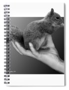 Hand Full Of Squirrel Spiral Notebook