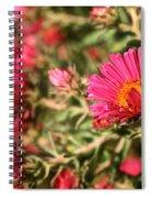 Happy Aster Spiral Notebook