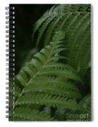 Hapuu Pulu Hawaiian Tree Fern - Cibotium Splendens Spiral Notebook