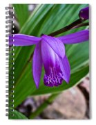 Hardy Orchid 1 Spiral Notebook