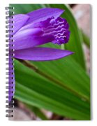 Hardy Orchid 3 Spiral Notebook