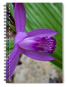 Hardy Orchid 5 Spiral Notebook