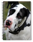 Harlequin Great Dane Spiral Notebook