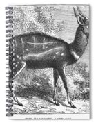 Harnessed Antelope Spiral Notebook