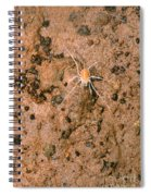 Harvestman Crosbyella Sp. In Cave Spiral Notebook
